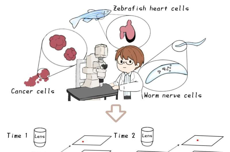 New AI-based versatile software for tracking many cells in 3D microscope videos