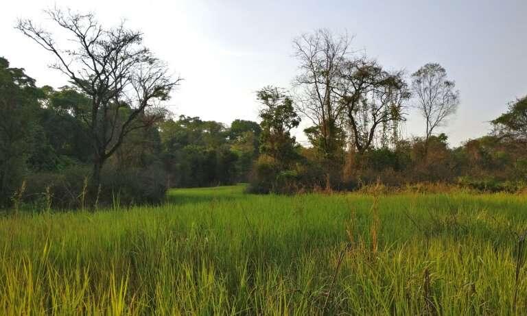 bangangai game reserve