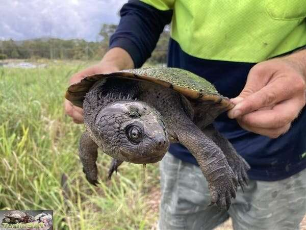 Our turtle program shows citizen science isn't just great for data, it makes science feel personal