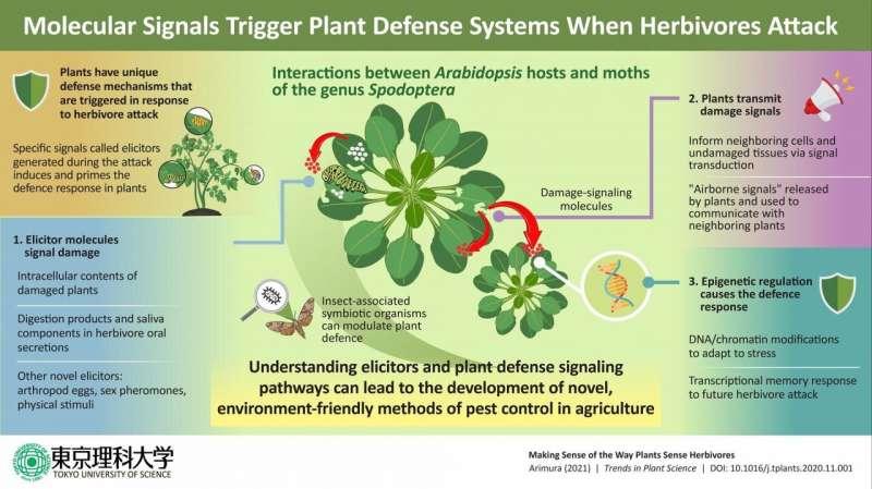 Perceiving predators: Understanding how plants 'sense' herbivore attack