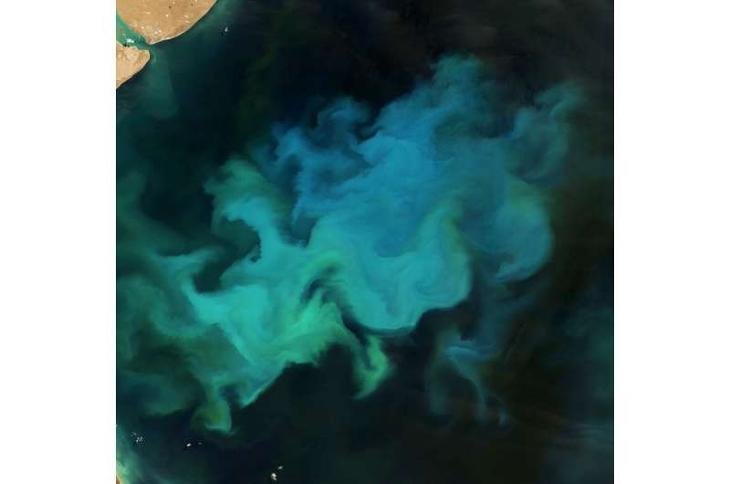 Phytoplankton Factory in the Argentine Sea