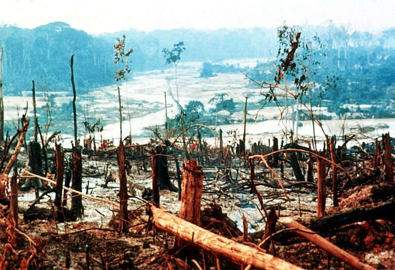 Protected areas see continued deforestation but at a reduced rate, OSU research shows