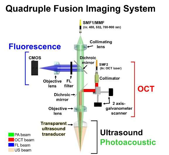 Quadruple fusion imaging via transparent ultrasound transducer
