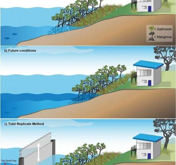 Recreating the perfect tide to protect coastal wetlands from rising sea levels
