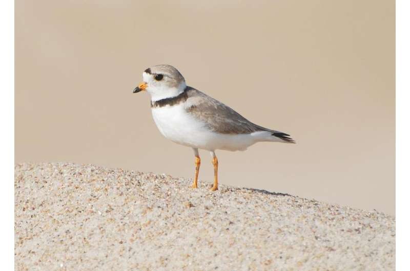 Regional habitat differences identified for threatened piping plovers on Atlantic coast