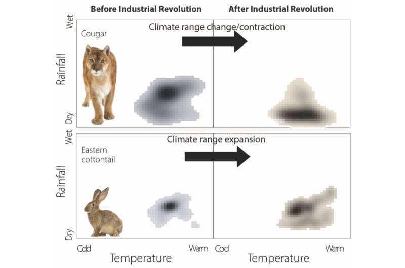 Researchers uncover unequal effects of human activity on mammals