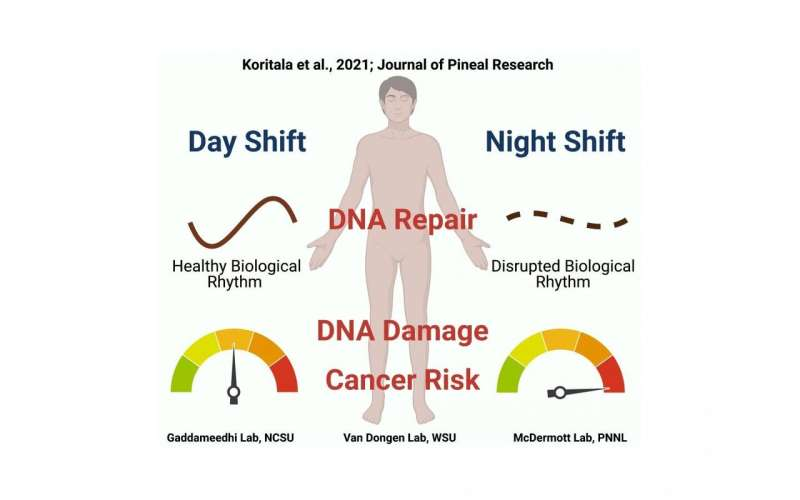 Research offers insights on how night shift work increases cancer risk