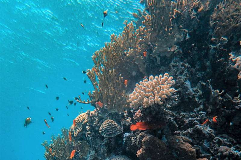 Satellites highlight a 30-year rise in ocean acidification