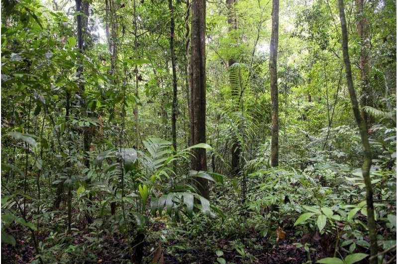 Smithsonian scientists reduce uncertainty in forest carbon storage calculations