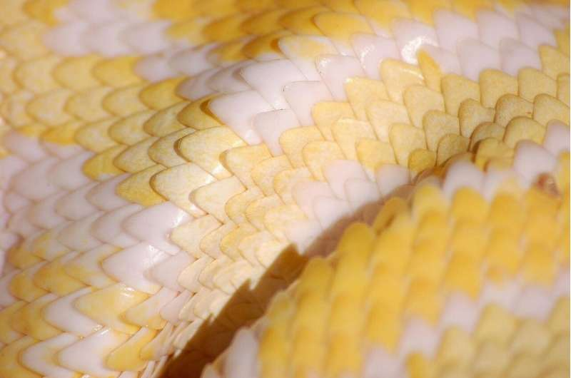 Snakeskin inspires new, friction-reducing material