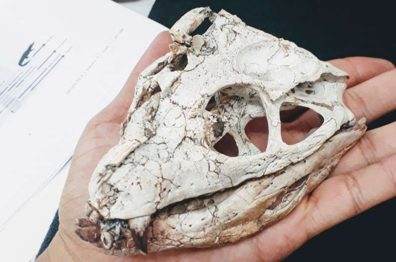 Snappy evolution was behind the success of ancient crocodiles