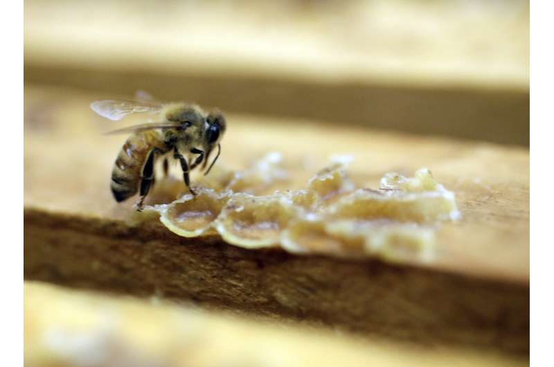 Research: The use of pesticides in the United States has fallen, but it is more harmful to pollinators