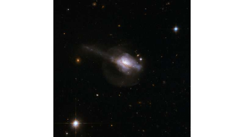 The circumnuclear starburst ring in infrared ultraluminous galaxies