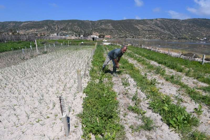 Tunisia 'sandy' farms resist drought, development Tunisian farmers have learned to take advantage of the light, sandy soil and the fact that underground freshwater floats above t