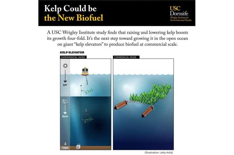 Studi USC menunjukkan potensi yang menjanjikan untuk biofuel laut