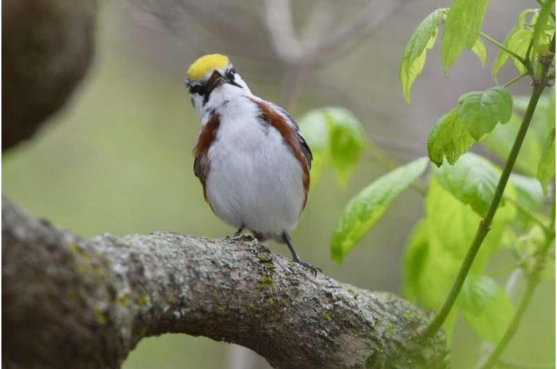 Weather radar for ecological forecasting can lessen hazards for migratory birds