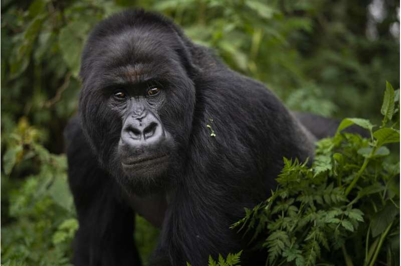 Zoos, scientists aim to curb people giving virus to animals