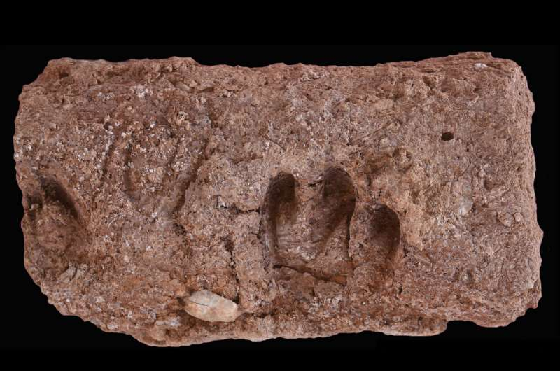 10,000-year-old DNA pens the first tales of the earliest domesticated goats