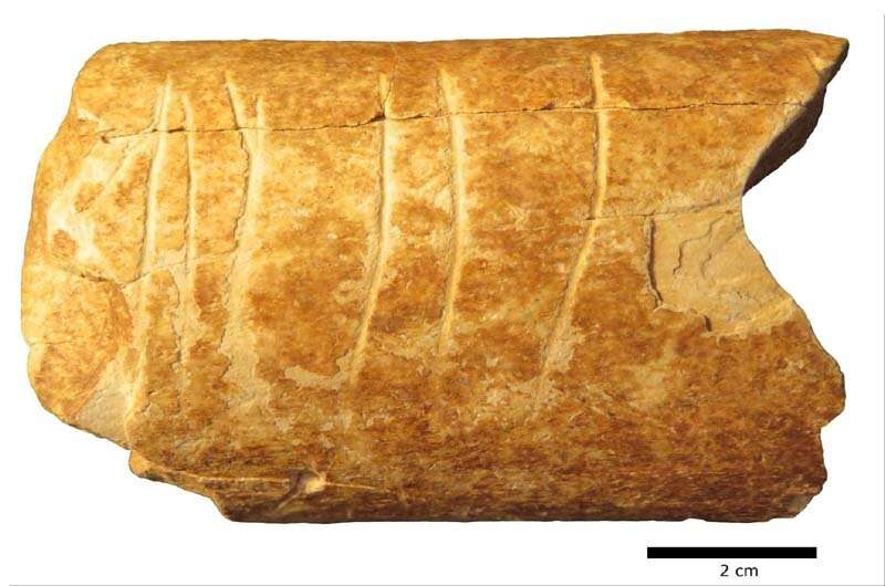 Researchers uncover prehistoric bone with etchings believed to be one of the oldest evidence of human use of symbols