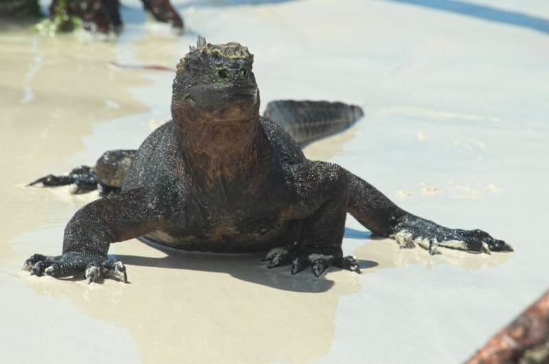 Scientists discover the secret of Galápagos' rich ecosystem