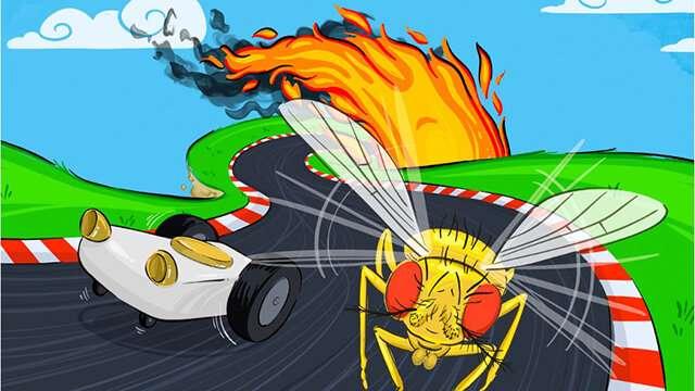 Understanding fruit fly behavior may be next step toward autonomous vehicles