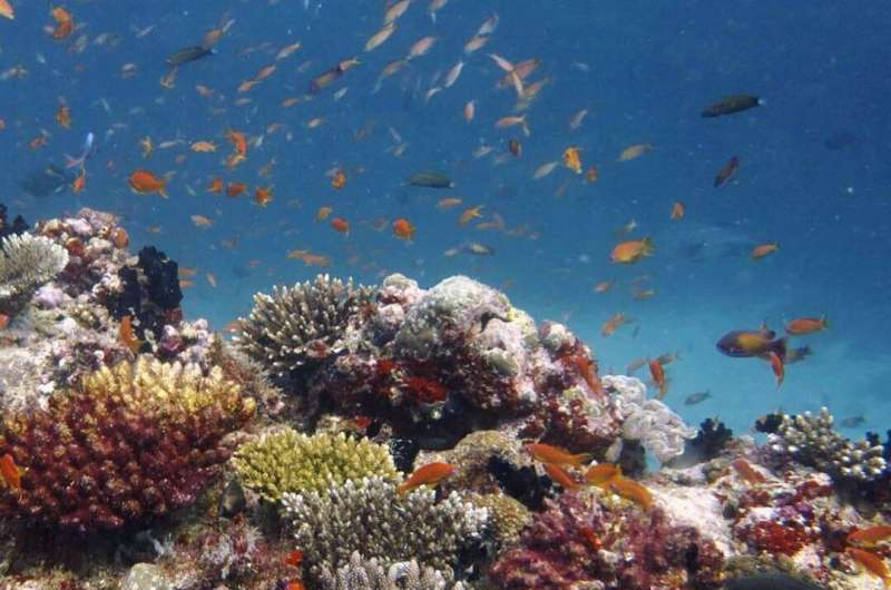 Study reveals energy sources supporting coral reef predators