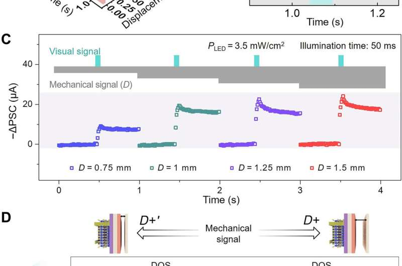 A bioinspired mechano-photonic artificial synapse