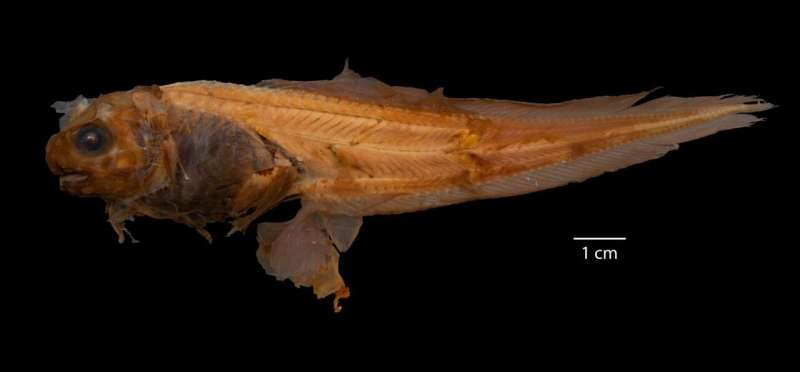 After 40 years, new fish species in named by students on Guam