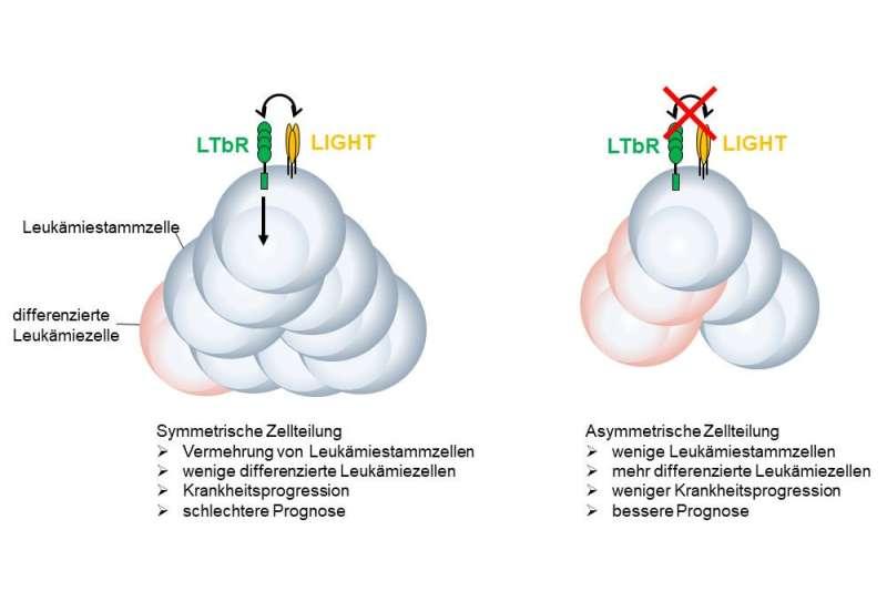 Cancer research: Targeted elimination of leukemic stem cells