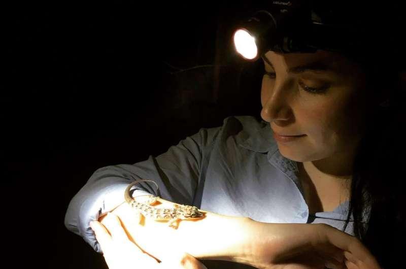 Christmas Island reptile-killer identified