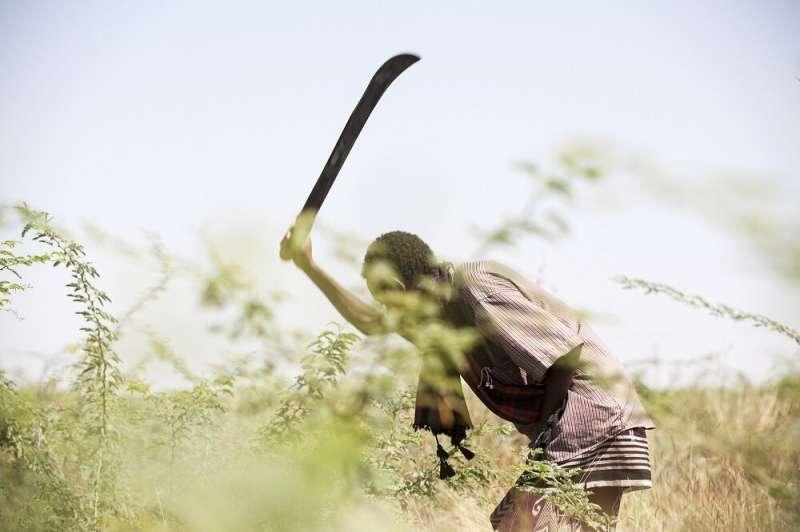 Clearing of woody weeds in Baringo County, Kenya, may yield major livelihood benefits