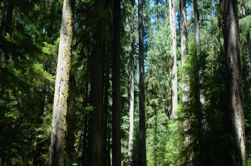 Curb climate change the easy way: don't cut down big trees