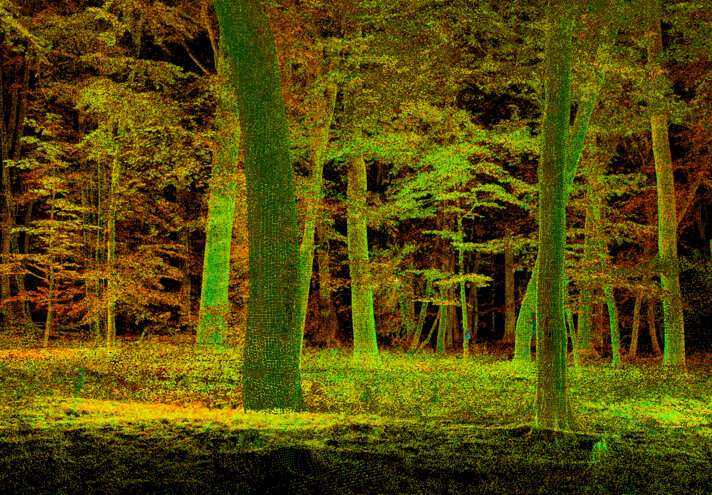 Forests of the world in 3D