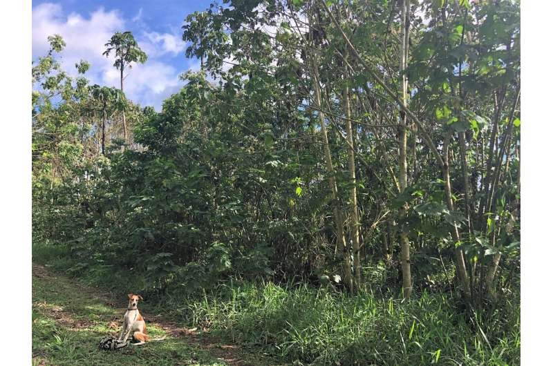 Forests on caffeine: coffee waste can boost forest recovery