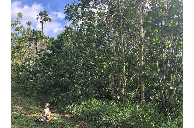 Bosques en cafeína: el desperdicio de café puede impulsar la recuperación forestal
