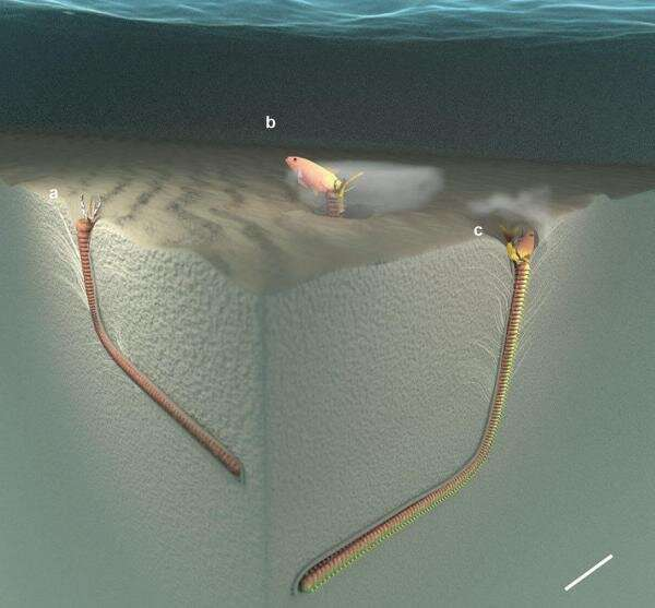 Giant predatory worms roamed the seafloor until 5.3 million years ago