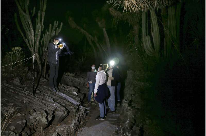In quieter Mexico City, rare bats make an appearance