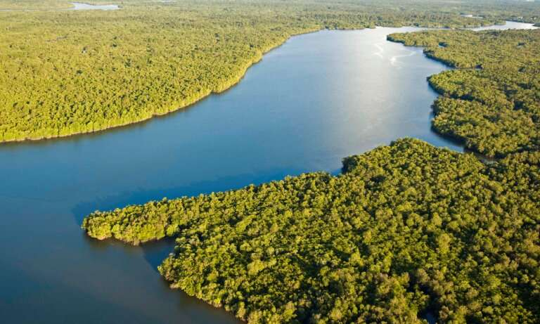Multitalented mangroves—spotlight on the trees that could save the planet