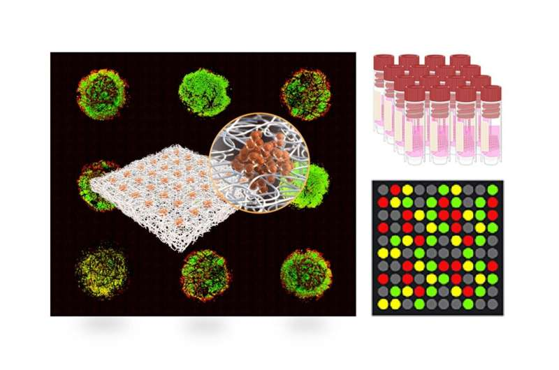 NYUAD researchers develop high throughput paper-based arrays of 3D tumor models
