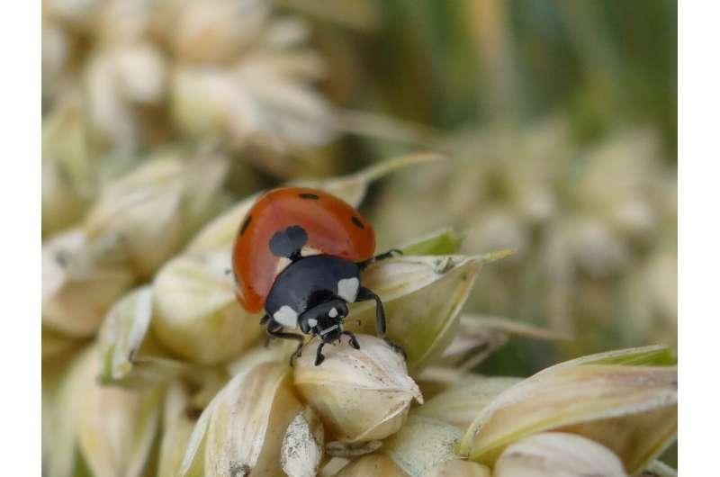 Pheromones, mulch and wildflowers – how to control pests without pesticides