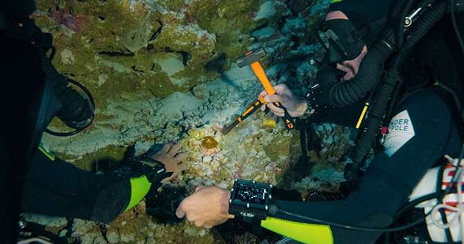 Record breaking observations at a depth of 172 metres shed light on how hard coral survives without light