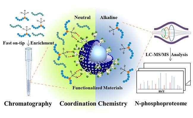 Researchers tailor rapid and effective N-phosphopeptides enrichment strategy