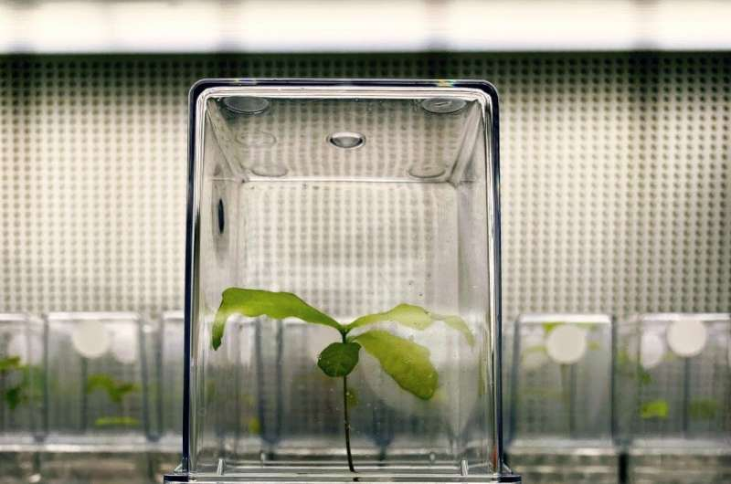 Seeds transfer their microbes to the next generation