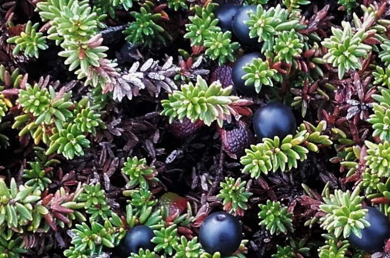 Shrubs and soils: A hot topic in the cool tundra