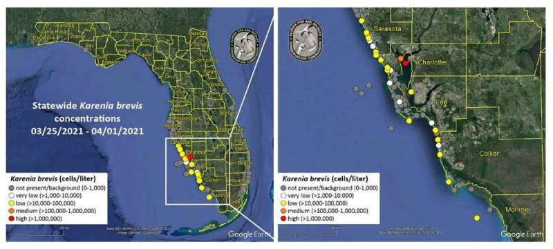 Water being pumped into Tampa Bay could cause a massive algae bloom, putting fragile manatee and fish habitats at risk