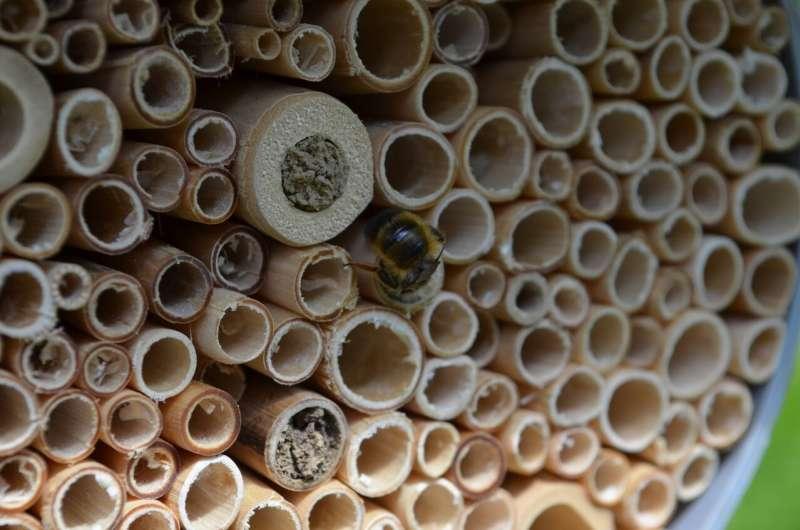 Lo que realmente significa la naturaleza urbana para la biodiversidad de insectos