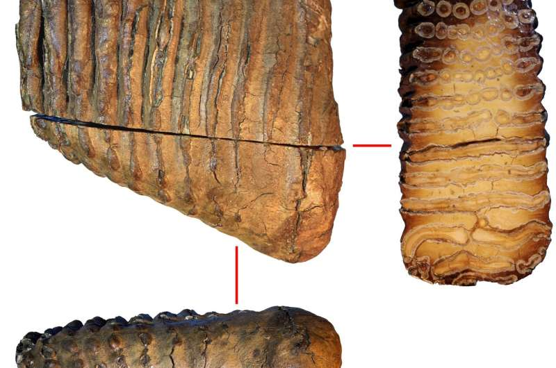 World's oldest DNA reveals how mammoths evolved