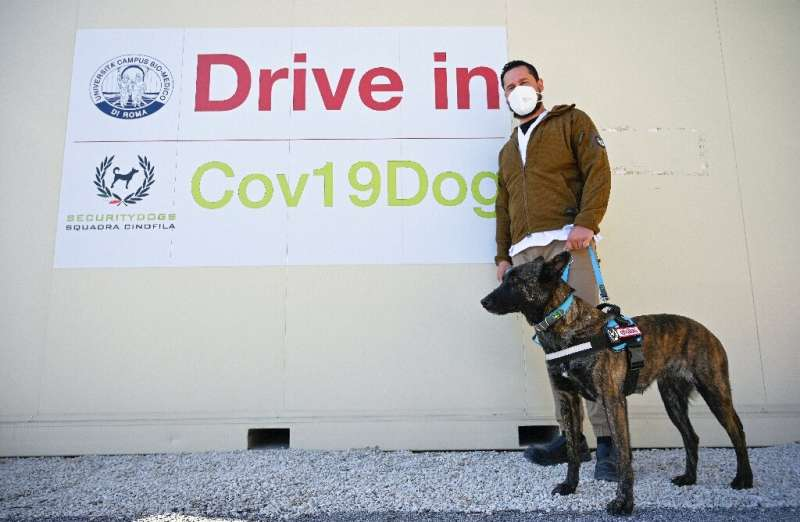 Researchers plan to ask visitors to a drive-through coronavirus test centre for sweat samples to train the dogs