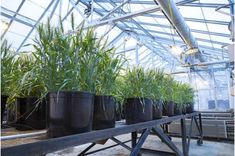 Researchers use new tool to study stress in root-colonizing bacteria
