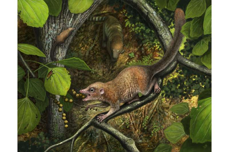 Scientists describe earliest primate fossils